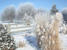 Artizan Horticulture: Gardening for Winter Interest