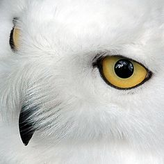 eyes by ~eudoxe2000 on deviantART