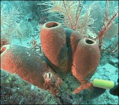 animated science biology pump sponge