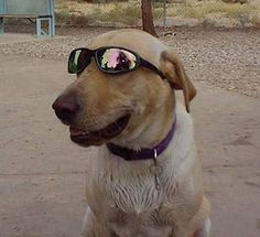 Doggy Sunglasses - great or ridiculous?