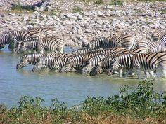 Namibia Okapi, Travel Planner, East Africa, Rest Of The World, Donkeys, Africa Travel, Zebras, Natural World, Wild Animals
