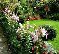 Lillies landscape