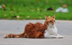 Cat at Changi Beach by kelvin255 on Flickr.