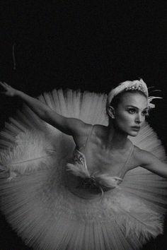 black swan   black and white