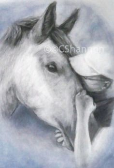Hand drawn in colour pencil Horse Artwork, Horse Portrait, Horse Drawn, Pet Portraits, Colored Pencils, Sketching, Hand Drawn, How To Draw Hands, Horses
