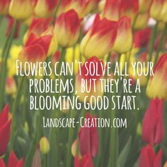 We can't wait to see those flowers blooming!