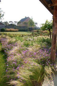 Grasses and flowers mixed in border Love Garden, Dream Garden, Small Gardens, Outdoor Gardens, Landscape Architecture, Landscape Design, Prairie Garden, Woodland Garden, Natural Garden