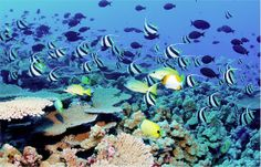 Samoa life | Amazing sea life - Palolo Deep, Samoa