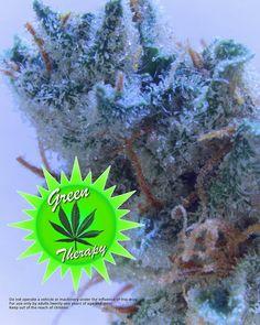 Some amazing sour strawberry kush by @driftawayfarms #trichomes #eugene #oregon #marijuana #ganja #dispensary #chronic #thc #jasmineandrover #jasmine #and #rover #crystals #frosty #fueledbythc #ommp #oha #medical #patient http://misstagram.com/ipost/1547321245543143754/?code=BV5MHmKA5lK