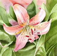 Watercolor Tiger Lily pink painting