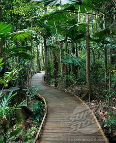 Perfect boardwalk for a jungle pathway.