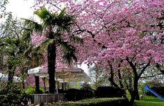 Der Frühling im Merziger Stadtpark ...  ist auch ohne Sonnenschein ansehenswert, oder? Aber Mitter der nächsten Woche kommt ja der Sommer..... :-)