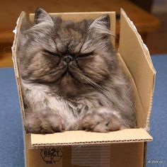 """◽️ """"Cats are cute. Cats in boxes are even cuter. They are aware of this and make the most of it."""" --Anonymous"""
