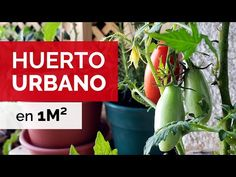 HUERTO URBANO EN 1 METRO CUADRADO | Paseo y Evolución - YouTube Grow Food, Gardening, Gardens, World, Container Gardening, Rooftop Patio, Lawn And Garden, Horticulture