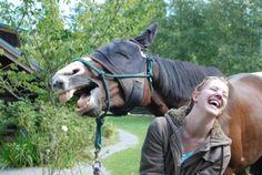 Horsey Happiness!