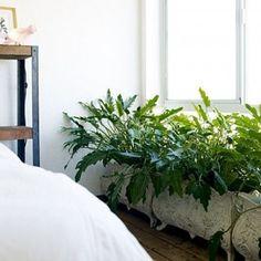 Living room plant ideas. Bedroom plants ideas. Indoor plants. Indoor gardening inspiration. House plants. Home plants garden ideas. indoorti...