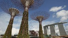 """Taking up just a fraction of the 250-acre landscaping project known as  'Gardens by the Bay' in Singapore, the world's first 'mechanical forest' in  Singapore truly is a sight to behold. Opening June 29th, this unique  merging of breathtaking engineering and the beauty of nature comprises of  18-man made """"supertrees"""" standing proud at up to 50 metres above the ocean  bay."""