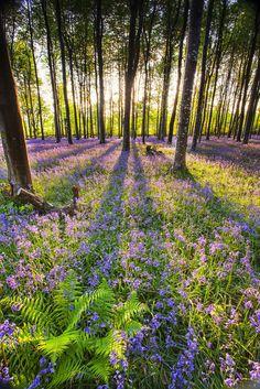 Ferns in a sea of blue | by Nigel Quest.