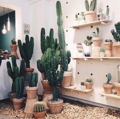 Kaktus - copenhagen