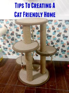 How can you make your home bettter for your cat? #IAMSCat #CollectiveBias #ad