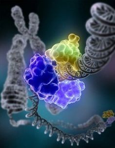 Repairing DNA -  Like a watch wrapped around a wrist, a special enzyme encircles the double helix to repair a broken strand of DNA. Without molecules that can mend such breaks, cells can malfunction, die, or become cancerous. http://images.nigms.nih.gov/index.cfm?event=viewDetail=2330