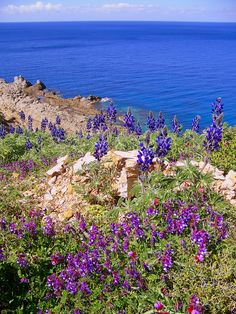 """Constant sea (thalassa) views, flowers in abundance all year and the pure clean sea air is therapeutic.No wonder Ikaria was chosen as a """"Blue Zone"""". It's ancient name was """"the healing island."""" Homer, in the Odyssey talks of the strong wines of Ikaria."""