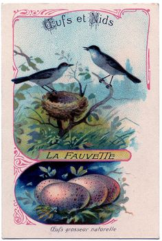 *The Graphics Fairy LLC*: Vintage Clip Art - French Birds with Eggs