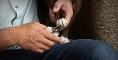 How to Treat Dog Nail Bleeding During Trimming | Wahl USA...
