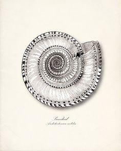 Sea Shell                                 http://www.etsy.com/shop/vintagebytheshore?ref=seller_info