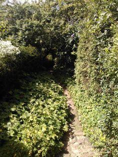 Corridor des Hydrangea