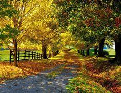 가을의 은행 나무의 길목