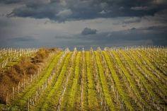 Vineyard, Marvel, Explore, Outdoor, Outdoors, Outdoor Life, Garden
