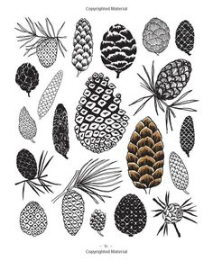 20 Ways to Draw a Tree and 44 Other Nifty Things from Nature: A ...