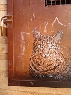 street art cat by C215