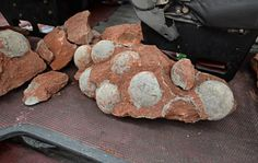 Dinosaur Eggs Found.  Nineteen of the fossilized dinosaur eggs were found intact during road works in southern China. Photo: SCMP Pictures