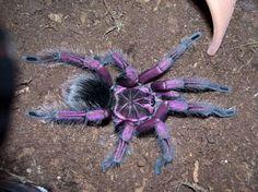 Spider Identification – Types of Spiders URL: http://wolfspider.org/