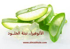 نبات الألوفيرا Aloe Vera لماذا أطلق عليها المصريين القدماء اسم نبتة الخلود In 2020 Aloe Vera Cucumber Aloe