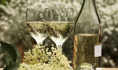 how to make elderflower champagne. i know what i'm doing this weekend... #elderflower champagne