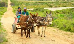 Donkey cart through the eyes of LondonBoy