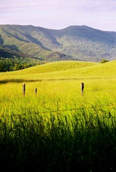 Come and see the beautiful of #Cades #Cove on your next #family #vacation to the Great #Smoky #Mountains.