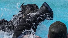 Dog bite training in the water