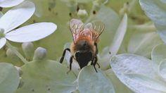 Happy Friday! Bee nice. ♡ #BackyardHabitat #pollinators #bees