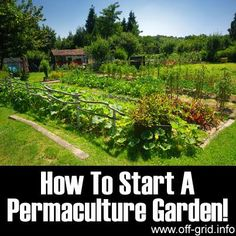 How To Start A Permaculture Garden!  http://off-grid.info/blog/how-to-start-a-permaculture-garden/  Permaculture is an amazing way to work with nature - instead of against it. Check out this great tutorial to learn more.