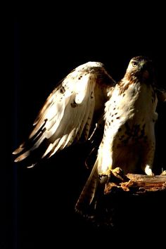 For the past 25 years, HeARTs Speak member Dina of DogBone photo - db has worked with Fontenelle Forest's Raptor Recovery, helping to care for, photograph, and release the amazing birds they rescue and rehabilitate.