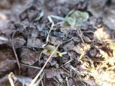La ferme de Vanessa: Encore de la luzerne! Agriculture Biologique, Plants, Farm Gate, Flora, Plant