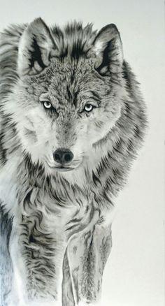Wolf Drawings, Animals Amazing, Wolf Wallpaper, Chimera, Wolf Tattoos, Charcoal Drawing, Wild Life, Life Drawing, Tattoo Art