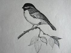 Bird Drawing by my Dad