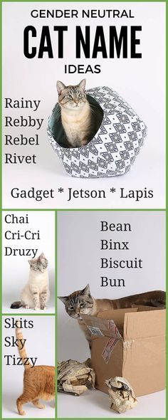 It is a challenge to name your new cat. You want just the right name that expresses the appearance and personality. Here are some ideas for gender neutral cat n