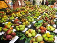Mango festival at Fairchild Garden-article