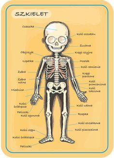School Discipline, School Notes, 4 Kids, Homeschool, Medical, Study, Science, Wordpress, Blog